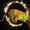 Цирки в Целине