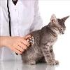Ветеринарные клиники в Целине